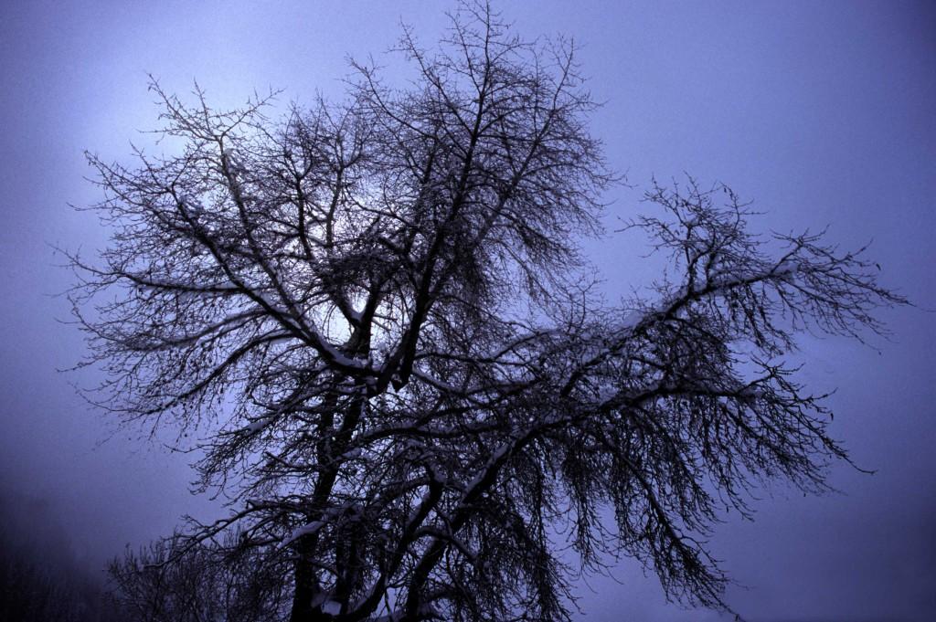 tree_final3